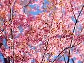 landscape, nature, romantic
