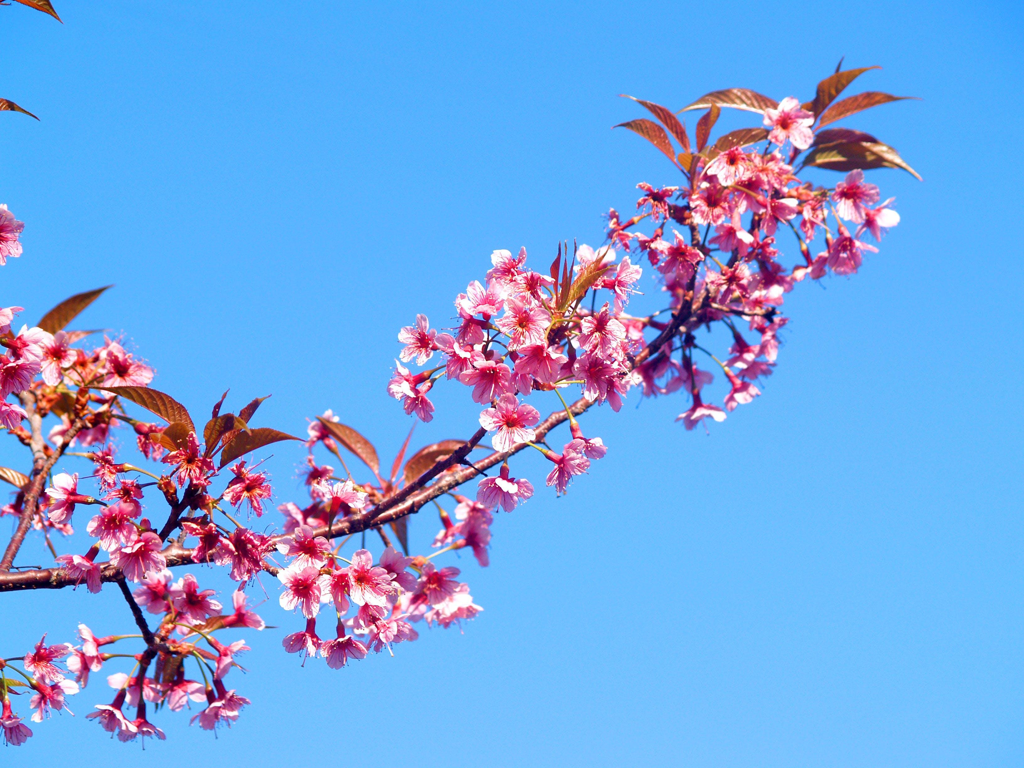 Pink Outdoor Flowers