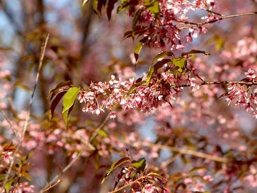 Foto d'estoc gratuïta de arbre, bonic, branques, brillant