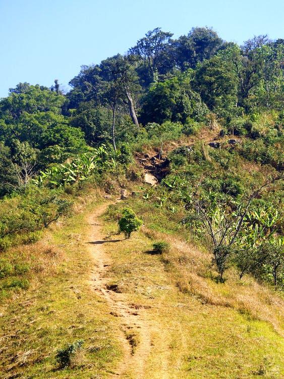 caminho, floresta, folhagem