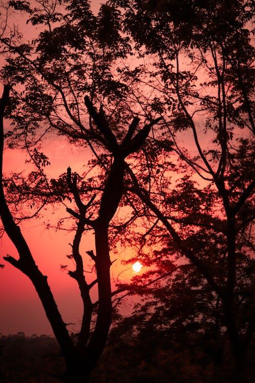 Free stock photo of beautiful sky, Beautiful sunset, beauty of nature, outdoor