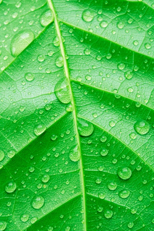 Leaf of green plant with drops of water