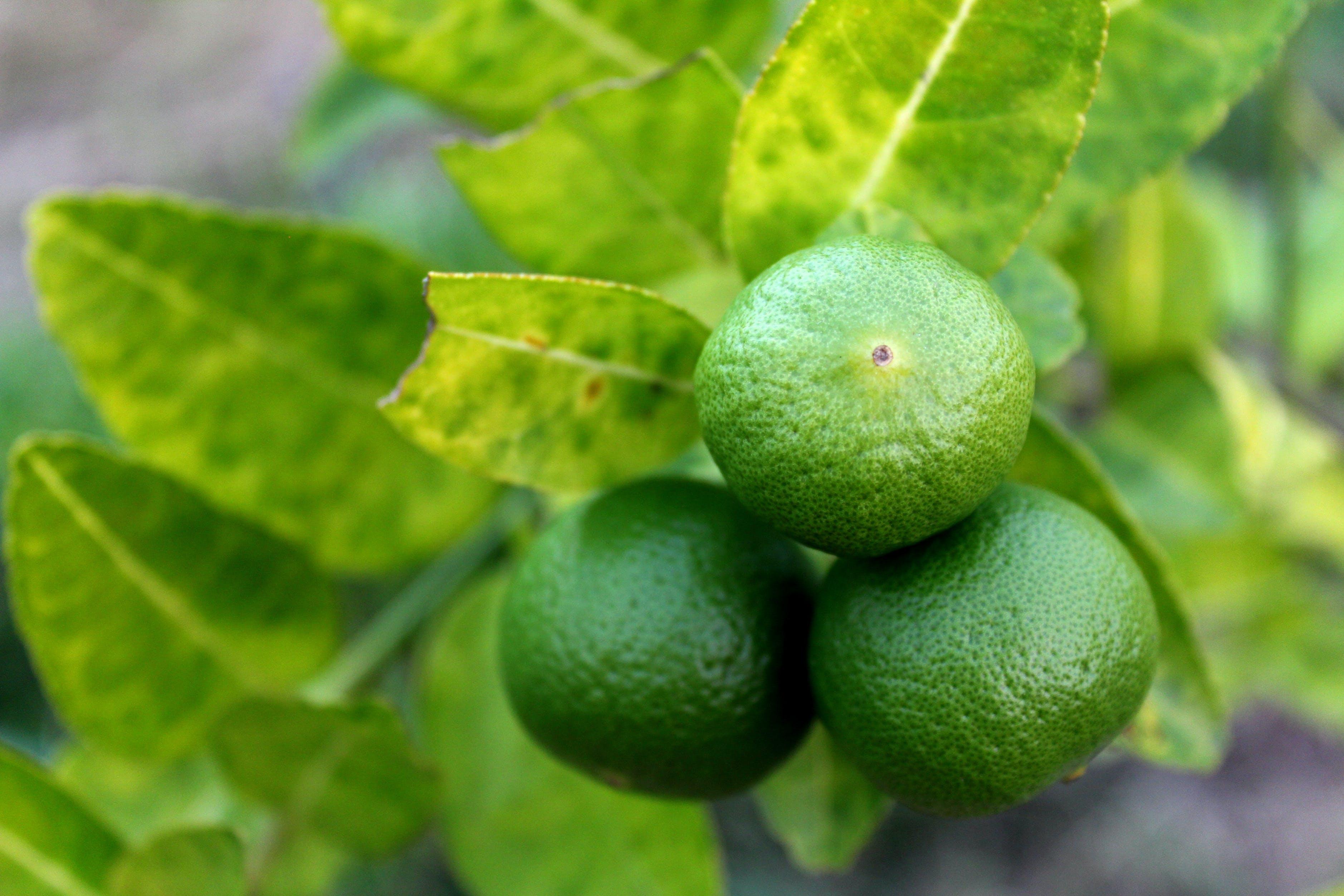 blur, citrus fruit, close-up