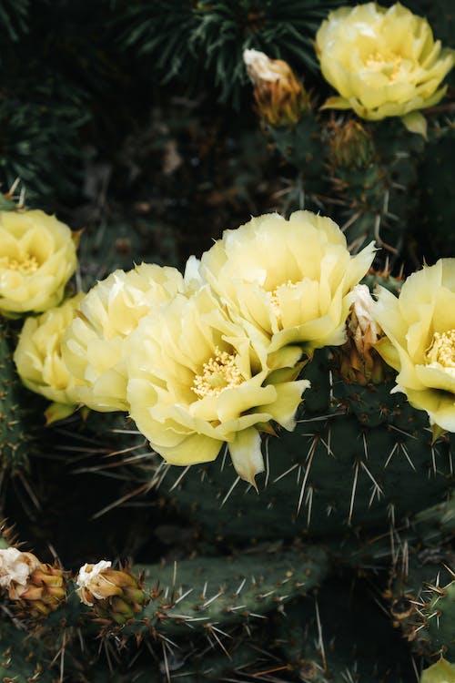 Photos gratuites de acéré, aiguisé, botanique, cactus