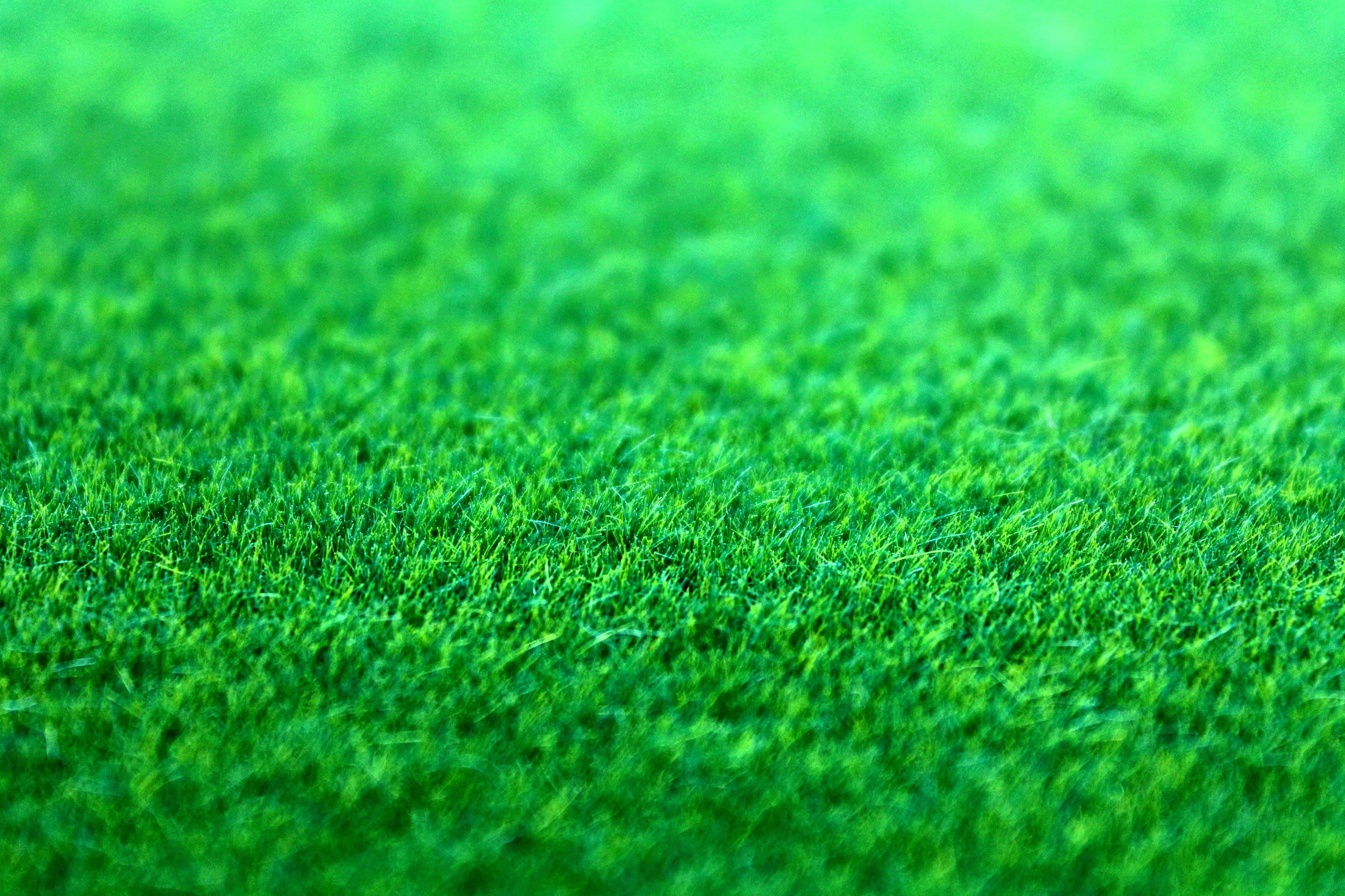 Gratis lagerfoto af bane, græs, græsplæne, grøn