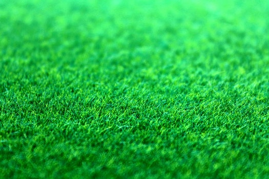 Free stock photo of nature, field, grass, lawn