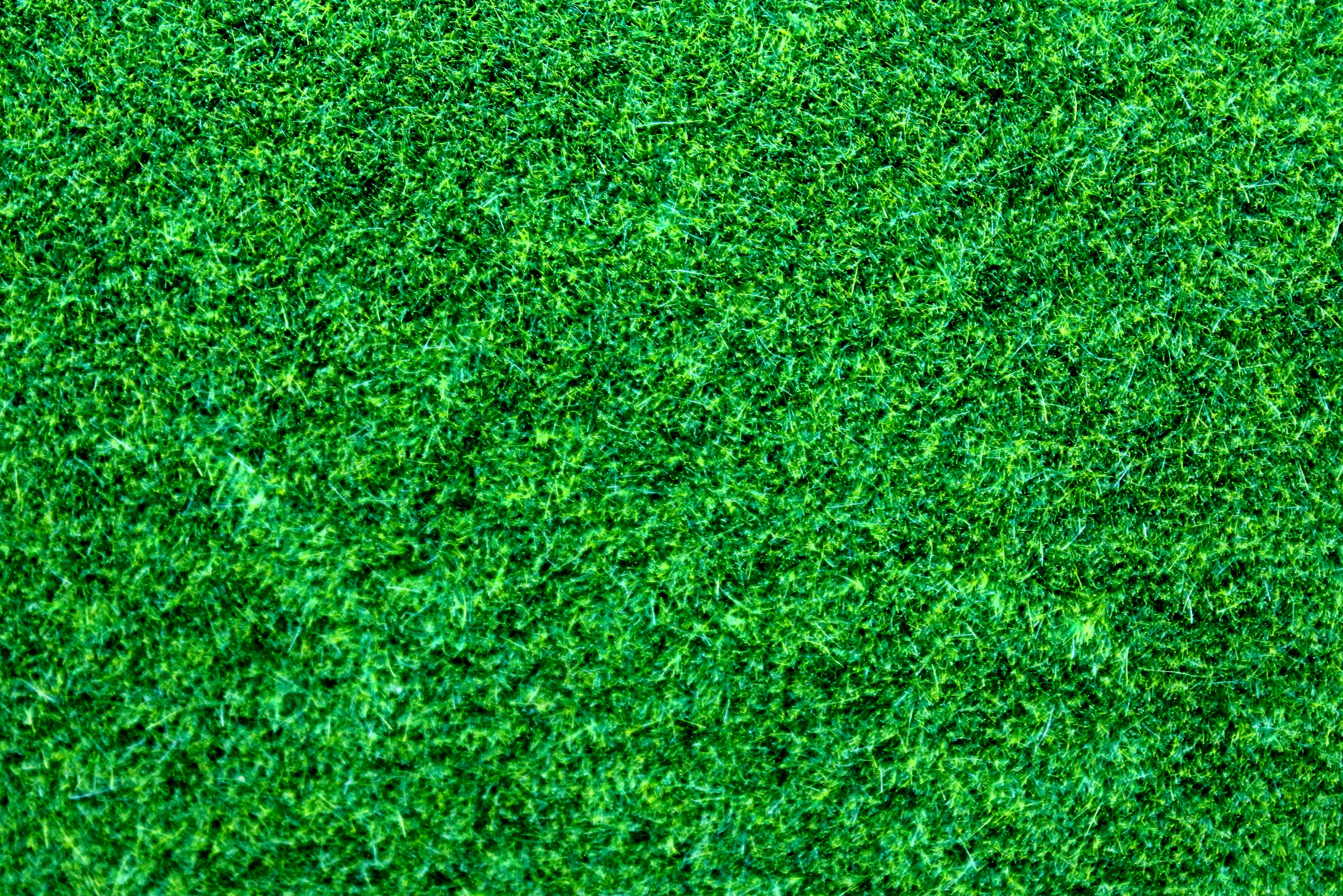 Free stock photo of grass, leaves, green, foliage