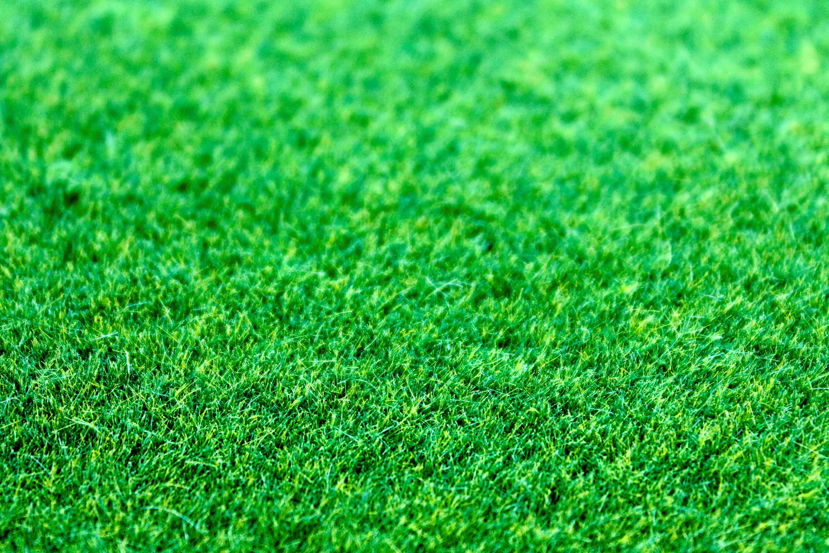 Closeup Photography Green Grass