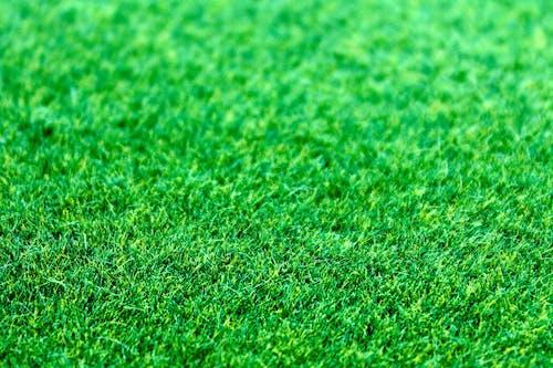 깨끗한, 녹색, 들판, 땅의 무료 스톡 사진