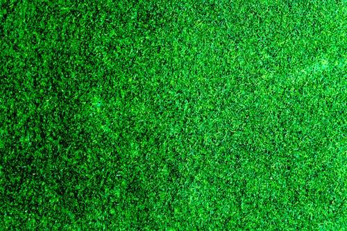 Darmowe zdjęcie z galerii z czysty, dziedziniec, jaskrawy