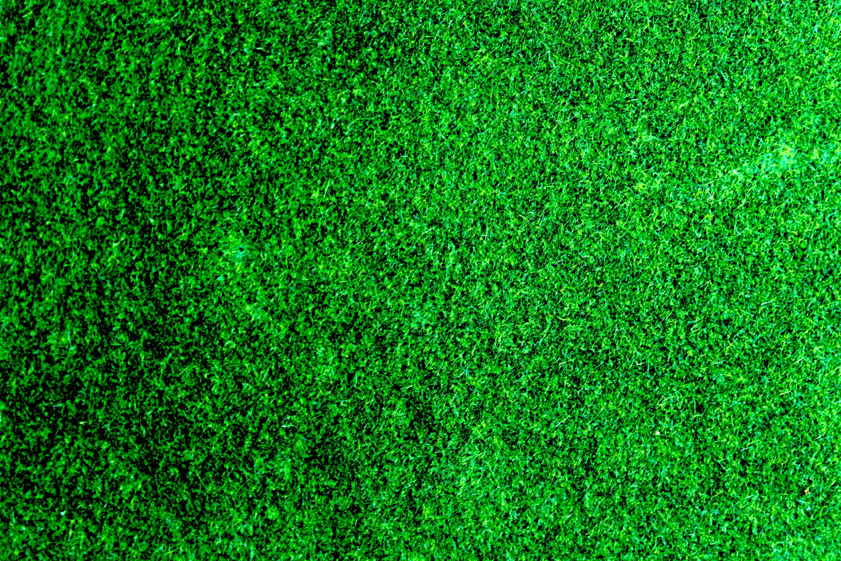 Green Lawn · Free Stock Photo