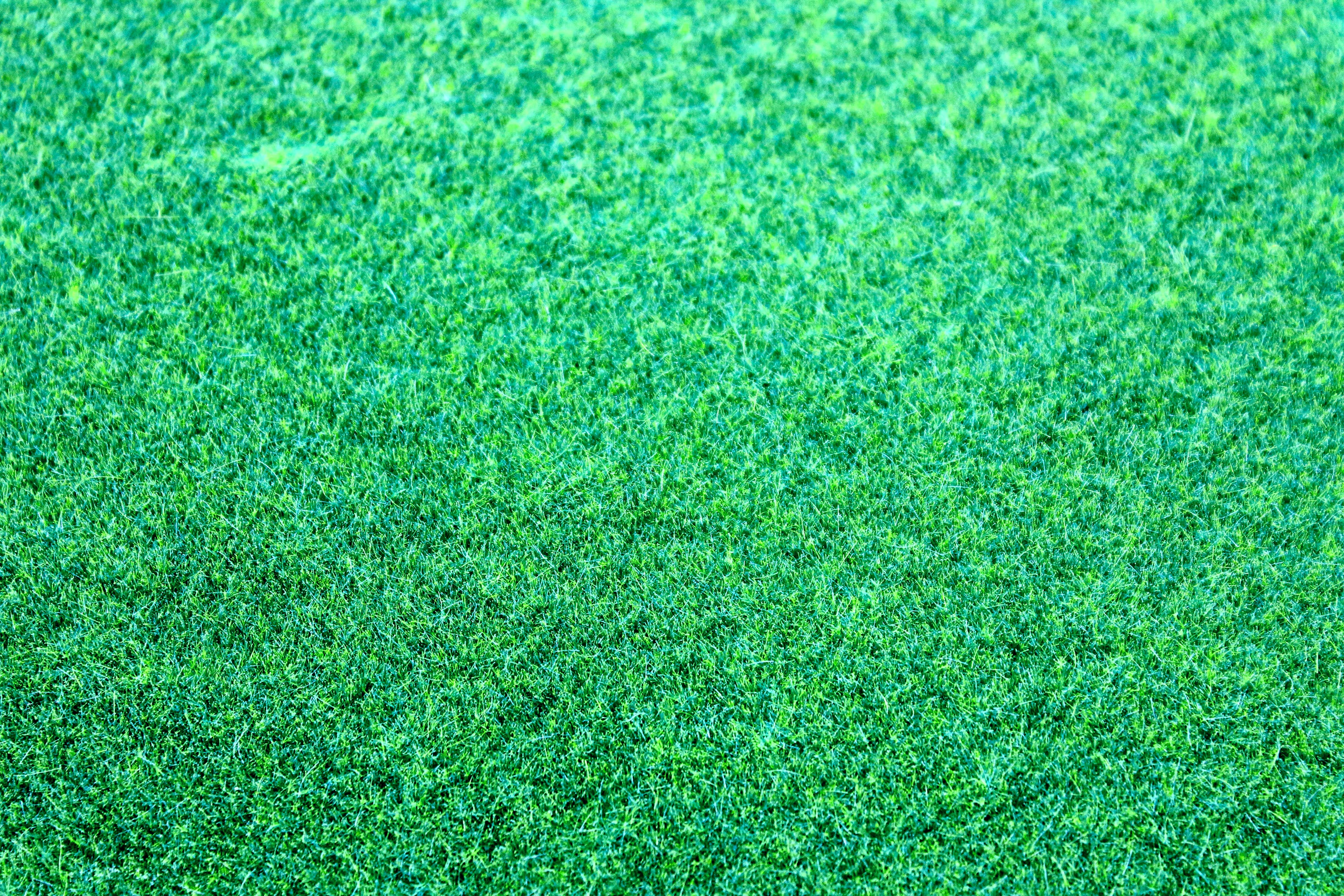 Free stock photo of pattern, grass, green, colors