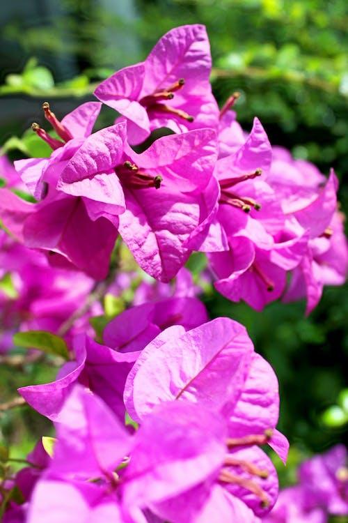 꽃, 꽃이 피는, 꽃잎, 나뭇잎의 무료 스톡 사진