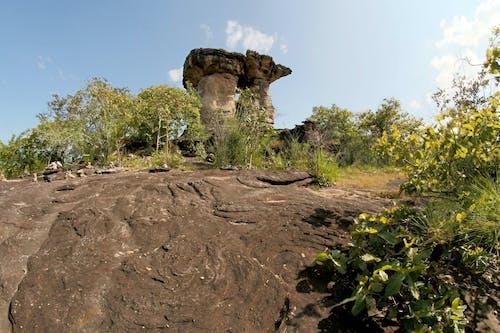 Gray Rock Formation Near Trees