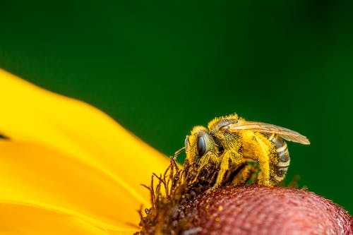 Bee collecting pollen on flower