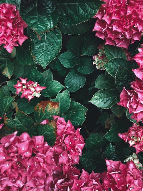 계절, 관목, 꽃이 피는, 꽃잎의 무료 스톡 사진