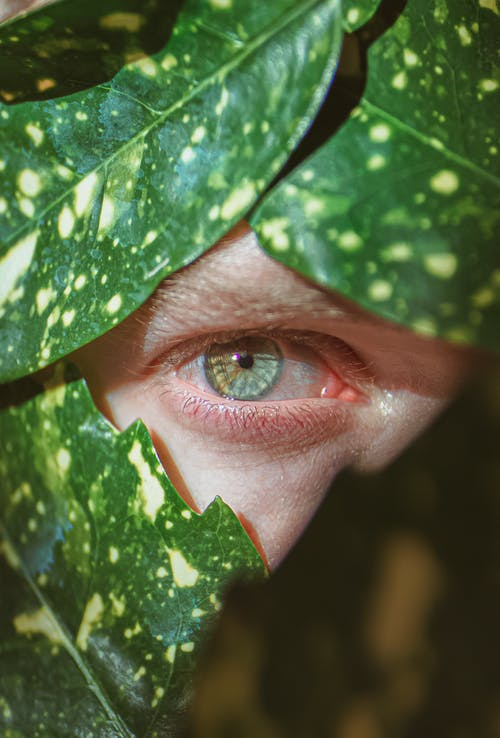 Crop man eye surrounded with green leaves