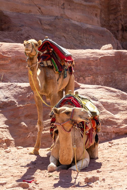 Brown Camel on Brown Rock Formation