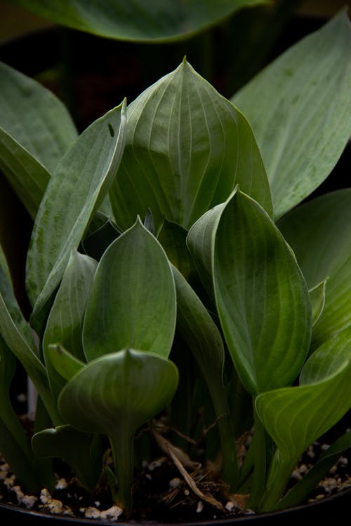 Verdant young plant with tender leaves cultivated in pot in summer abundant garden in daylight