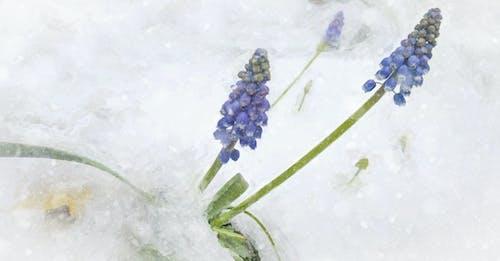 Free stock photo of flowers, minimalism, minimalist
