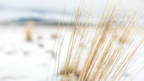 Free stock photo of grass, nature, winter