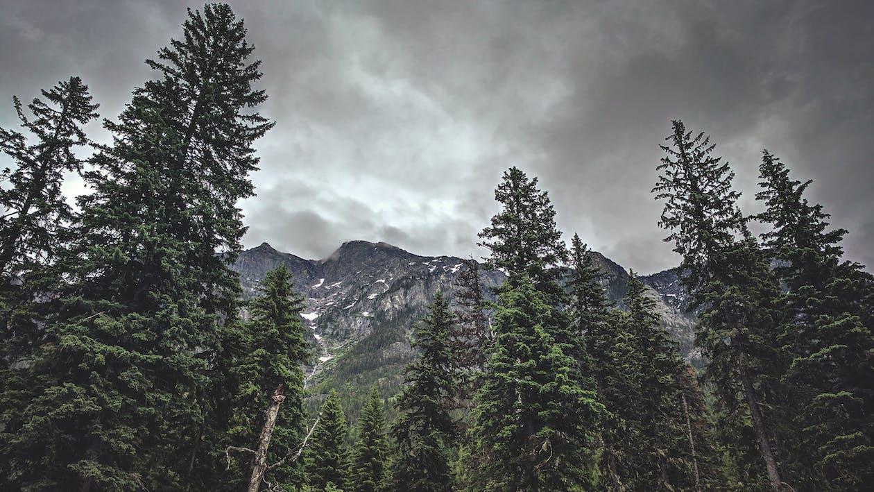 ağaçlar, bulutlar, çevre