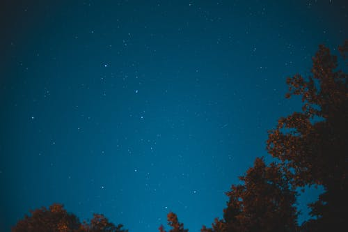 Starry sky over top of trees in forest