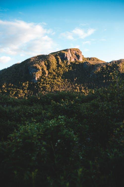 Mountain near forest under vivid blue sky