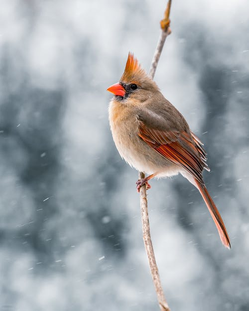Bird sitting on twig in nature