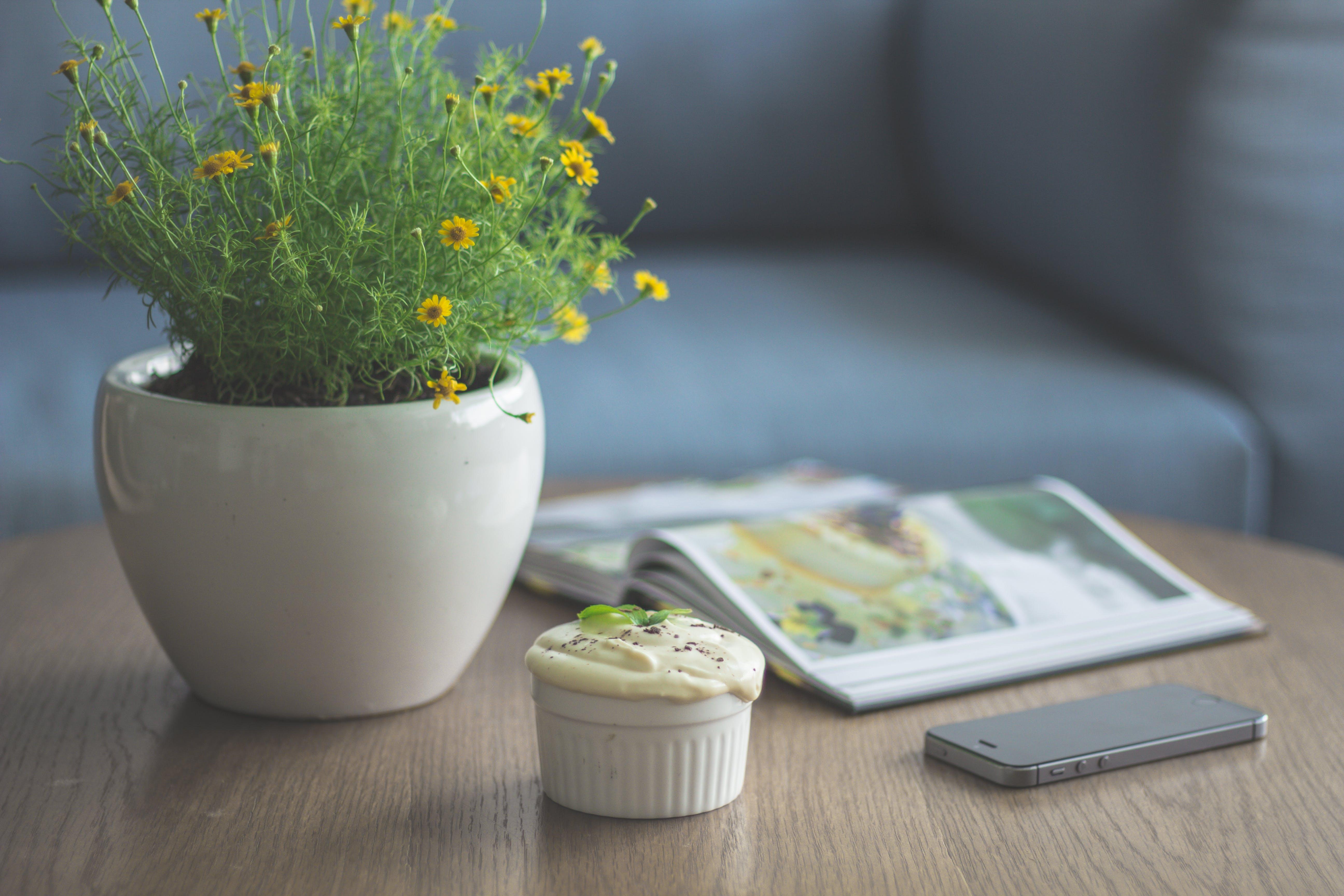 book, decor, decorative plant