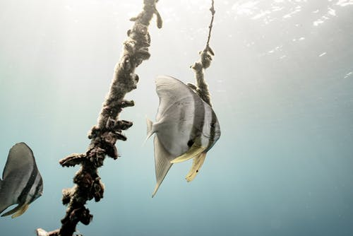 White and Gray Fish on Water