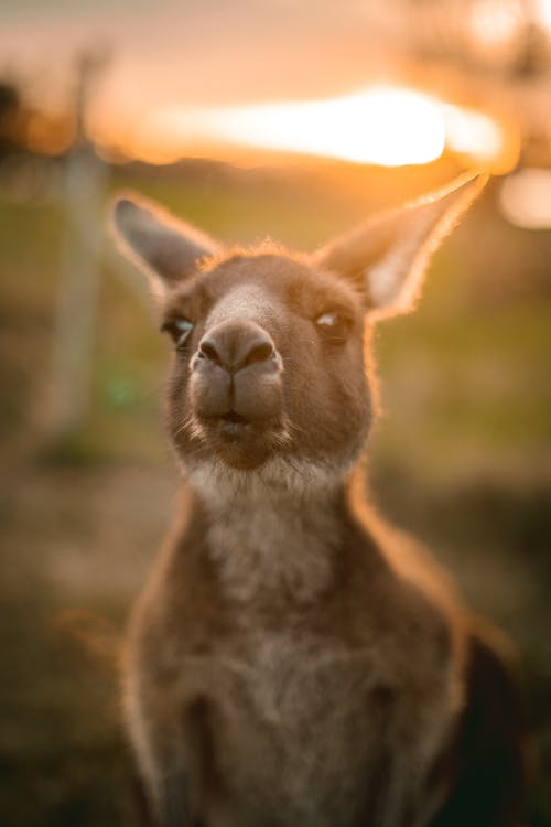 Photos gratuites de animal, aussie, australie