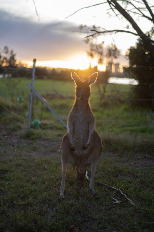 Photos gratuites de animal, arbre, australie