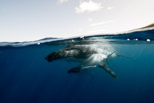 Black and White Dolphin on Blue Water