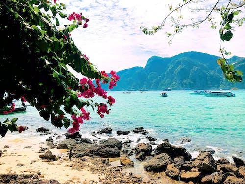 Free stock photo of bougainvillea, island, Krabi