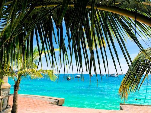Free stock photo of coconut tree, island, Krabi