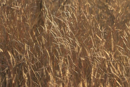 Základová fotografie zdarma na téma farma, pozadí, příroda, struktura