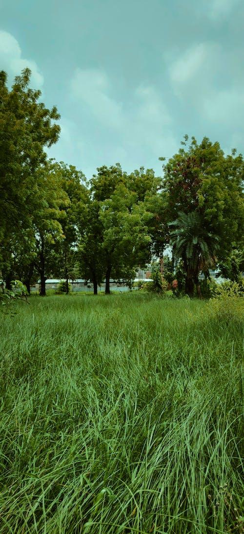 Fotos de stock gratuitas de árbol, blues, brizna de hierba