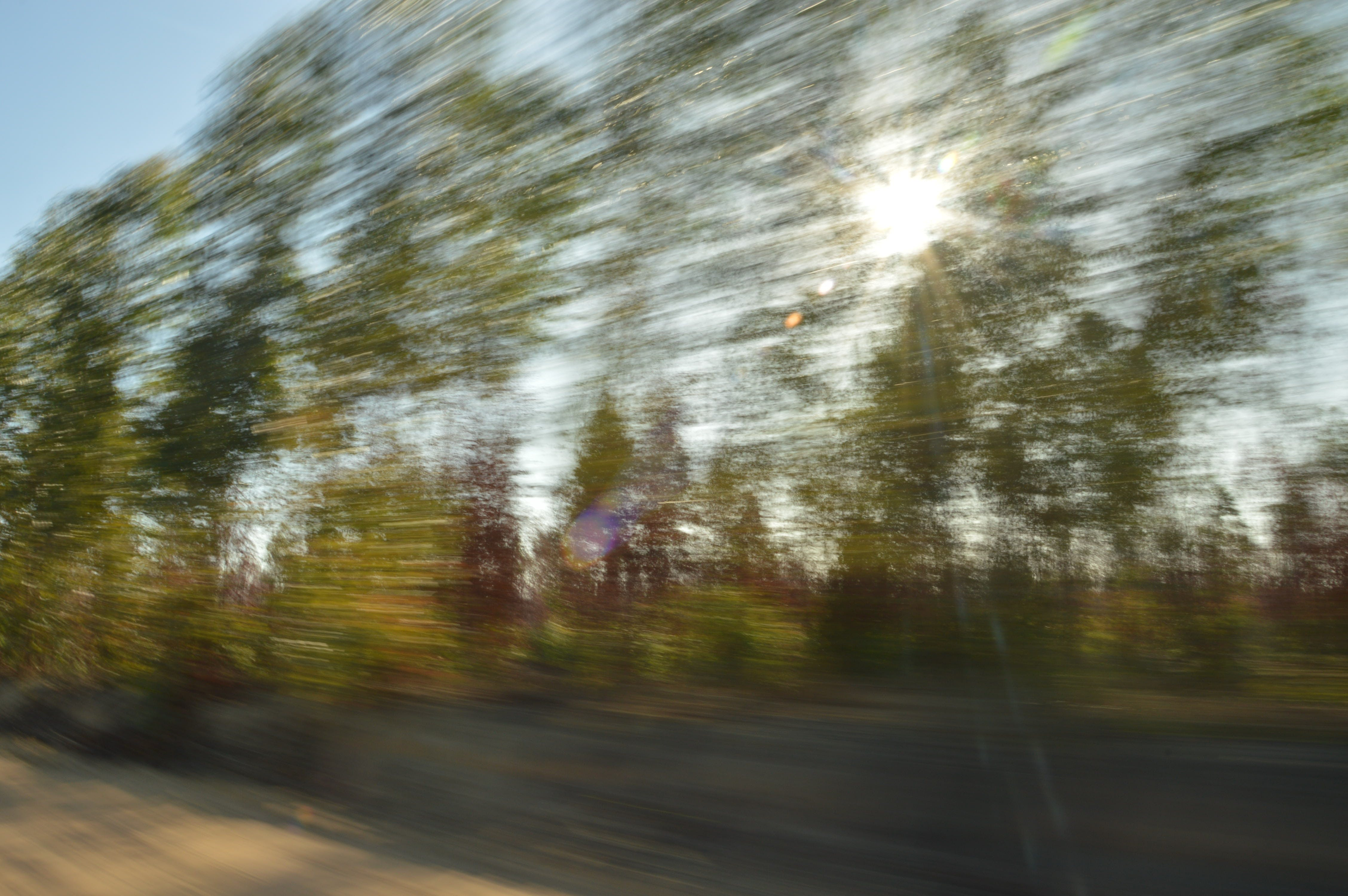 Free stock photo of fast, forest, road, speed
