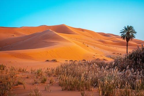 Darmowe zdjęcie z galerii z drzewo palmowe, maroko, oaza, piasek