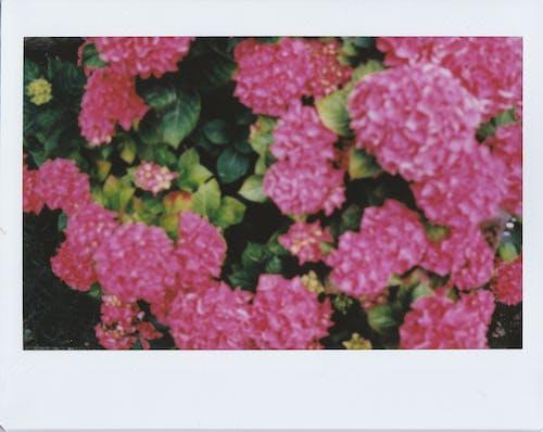 가지, 계절, 관목, 꽃의 무료 스톡 사진