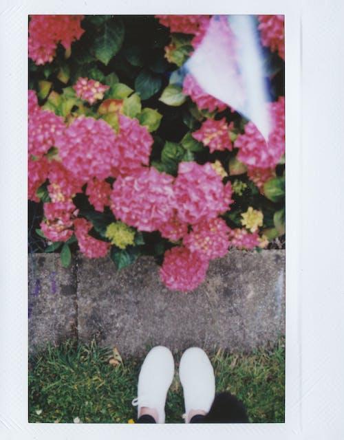 Pink Flowers on Green Grass