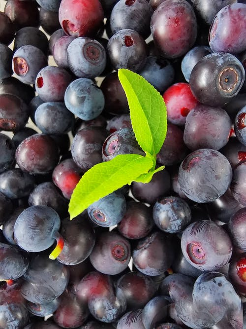 Free stock photo of blueberries