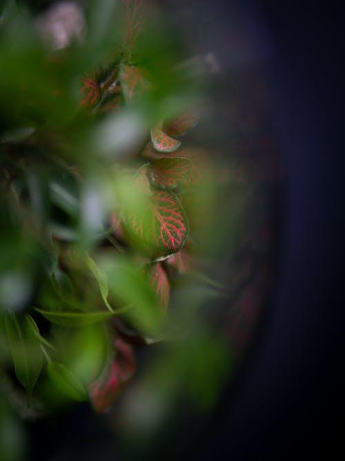 Free stock photo of bird's eye view, blur, blured, bush