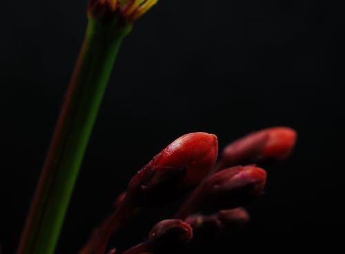 Free stock photo of alive, close, detail, flora