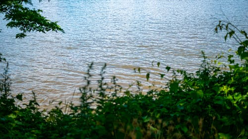 Free stock photo of greens, water