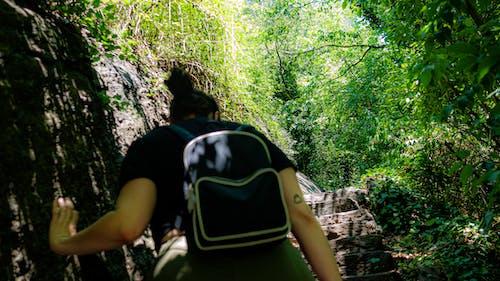 Free stock photo of exploring, green, park