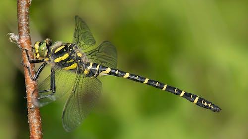 곤충, 금반지, 잠자리의 무료 스톡 사진