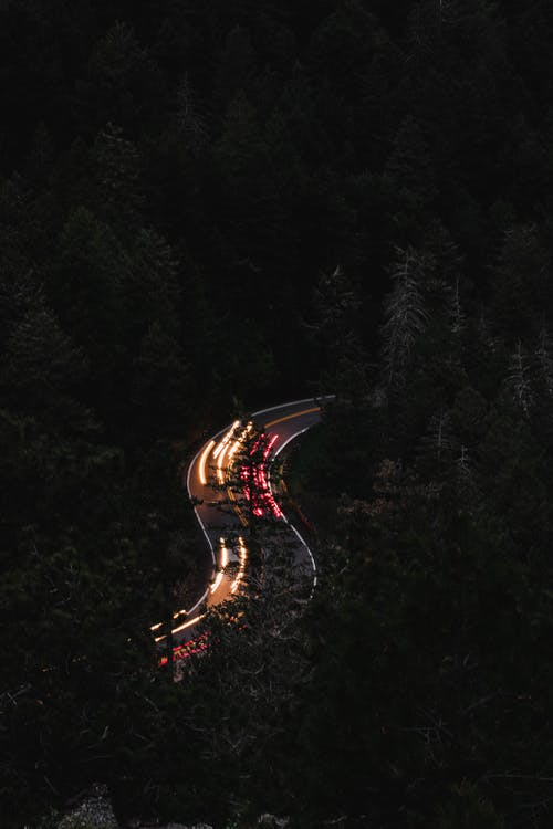 Cars on Road in Between Trees during Night Time