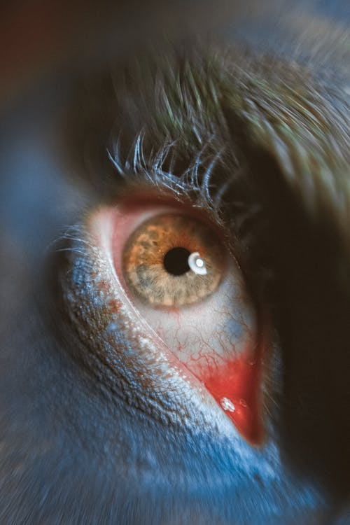 Close Up Photo of Human Eye